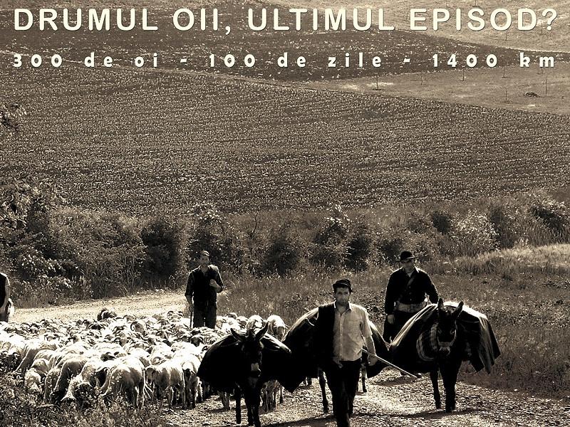 Vernisajul expoziției-semnal DRUMUL OII, ULTIMUL EPISOD? 300 de oi, 100 de zile, 1400 km joi, 22 septembrie, la  Muzeul Naţional al Ţăranului Român