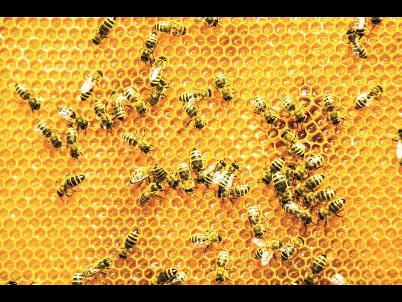 Mierea este hrana zeilor
