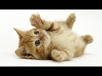 Fecalele pisicilor, vinovate pentru schizofrenie