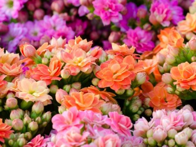 7 plante de apartament care pot îmbunătăți calitatea aerului din casa ta
