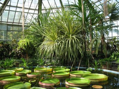 Grădina botanică ''Alexandru Borza''